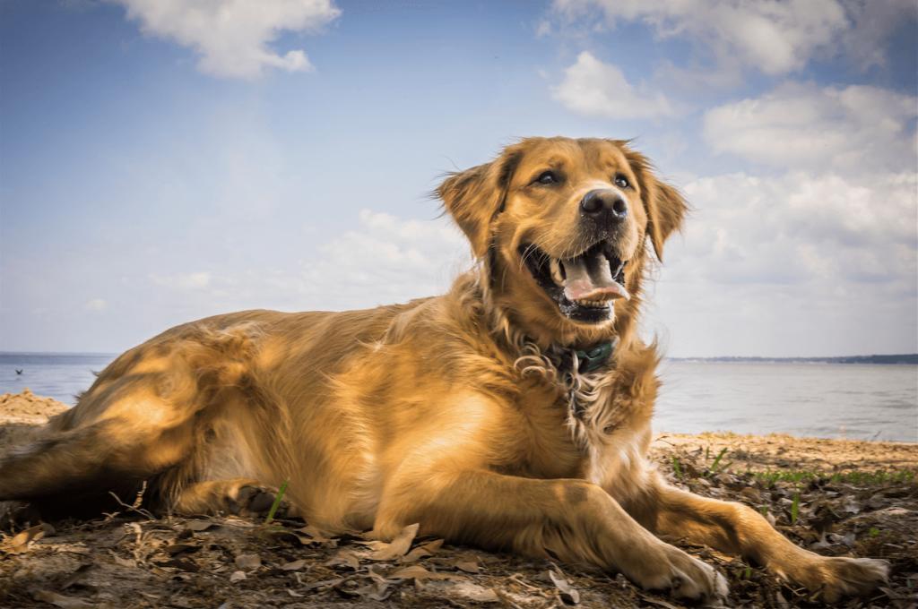 5 Gründe, warum auch du einen Hund brauchst