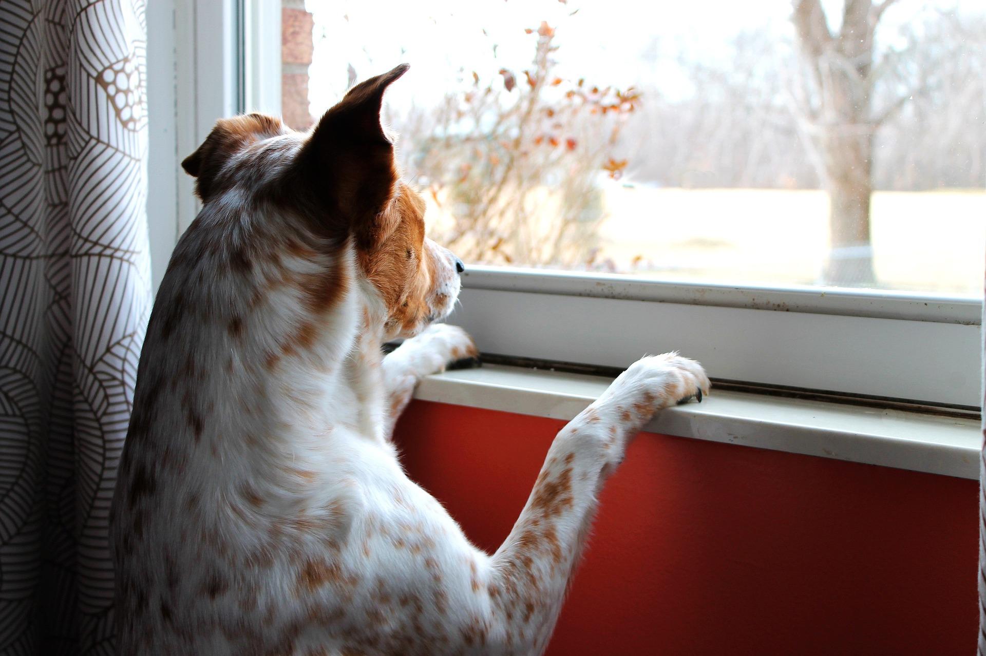 Rüde und läufige Hündin: Wenn Hunde verliebt sind