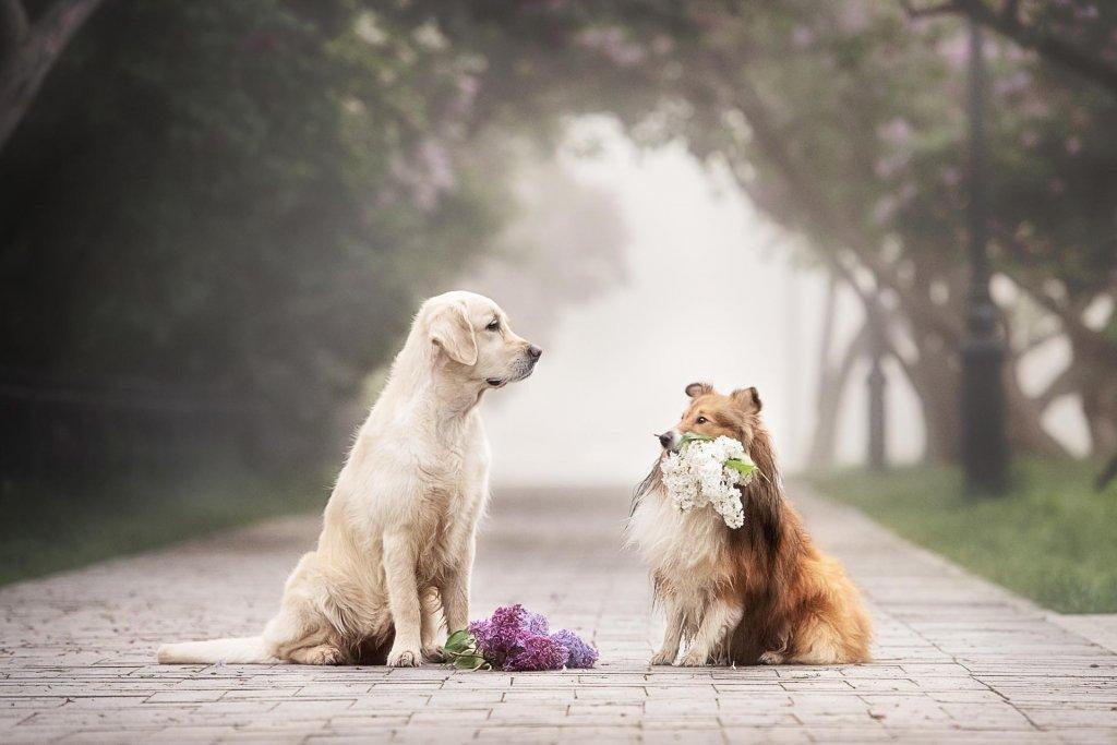 Rüde und läufige Hündin: Das passiert, wenn Hunde verliebt sind