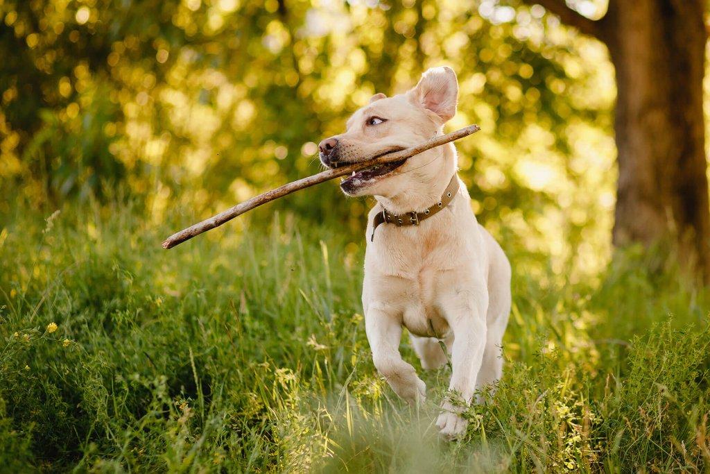 Mit diesen 5 Tipps steigerst du die Motivation deines Hundes