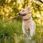 So motivierst du deinen Hund