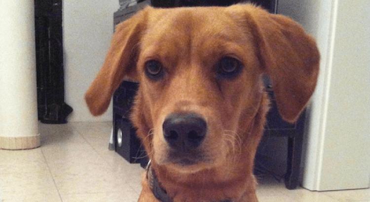 Die 10 Eigentumsregeln des Hundes