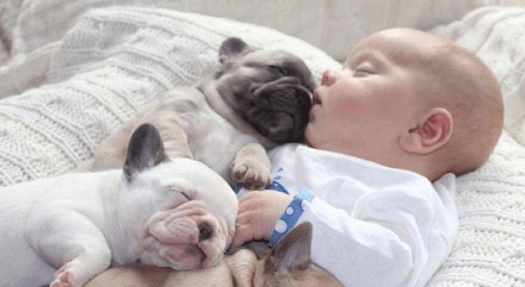 Hund und Baby: Sicherer Umgang mit einem Kind –