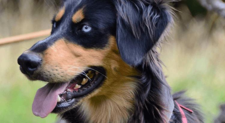 richtige Hundeschule