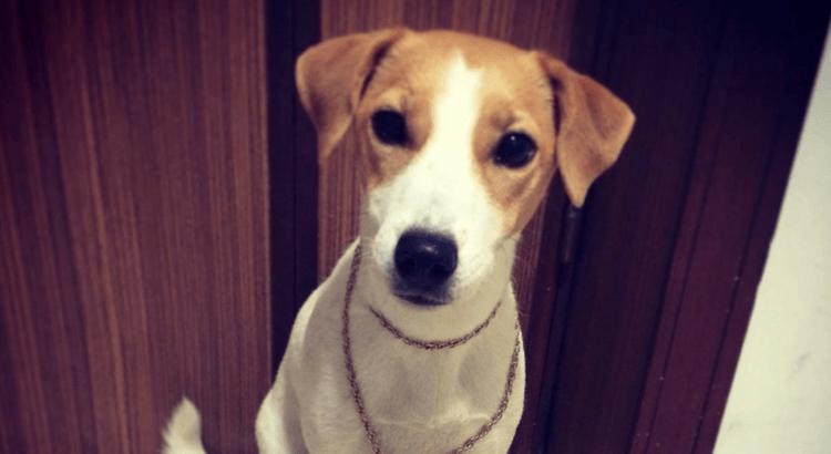 Probleme, die nur Hundebesitzer haben