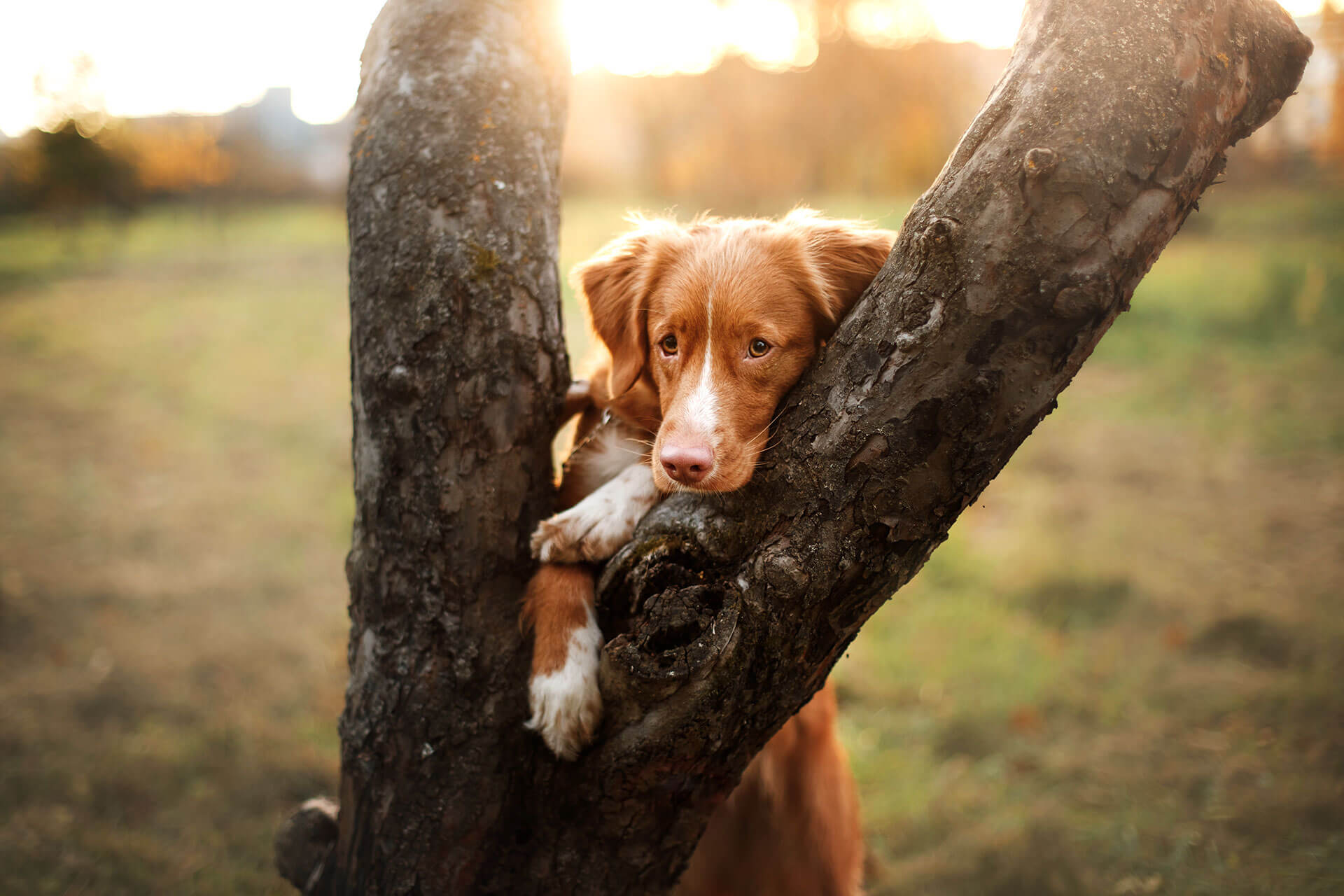 Overview of interesting facts and figures about dogs
