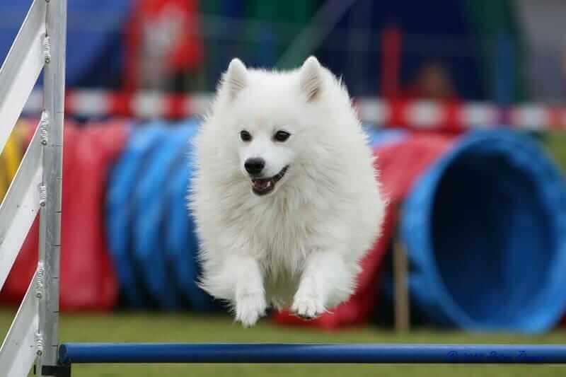 Agility für Hunde: Alles was du zu diesem Hundesport wissen musst