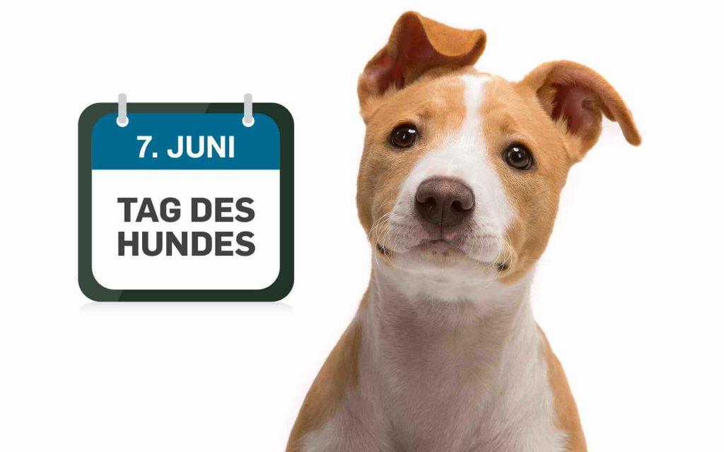 """Feiert gemeinsam den """"Tag des Hundes"""""""