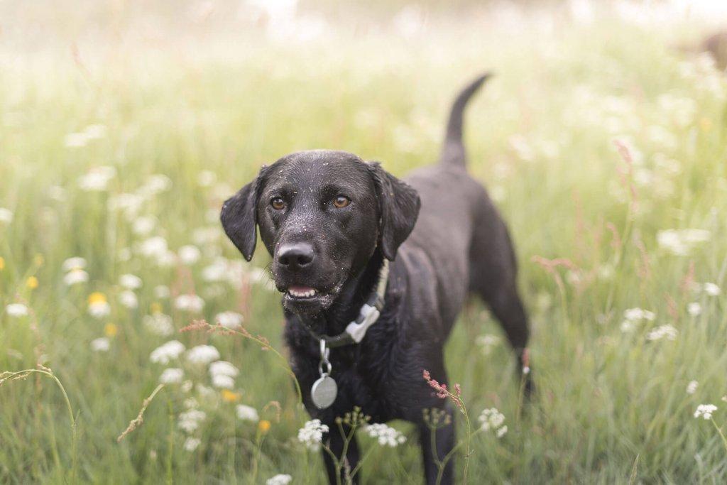 Mela ein Hund aus dem Tierheim