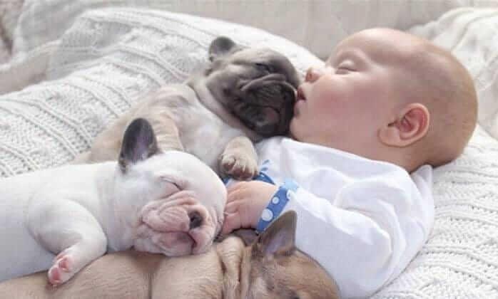 Babies und Hunde