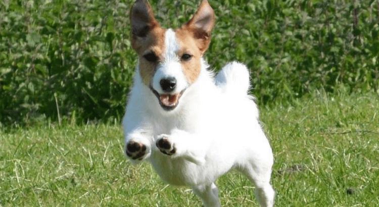 entlaufener Hund