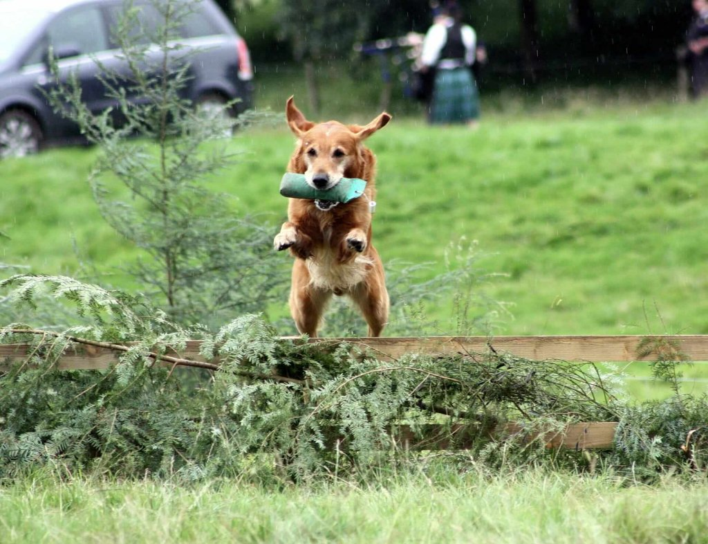 Hyperaktiver Hund: 4 Auslöser und Maßnahmen