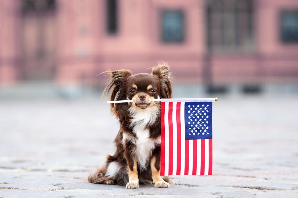 Firework fears? Keep your dog safe on the 4th of July!