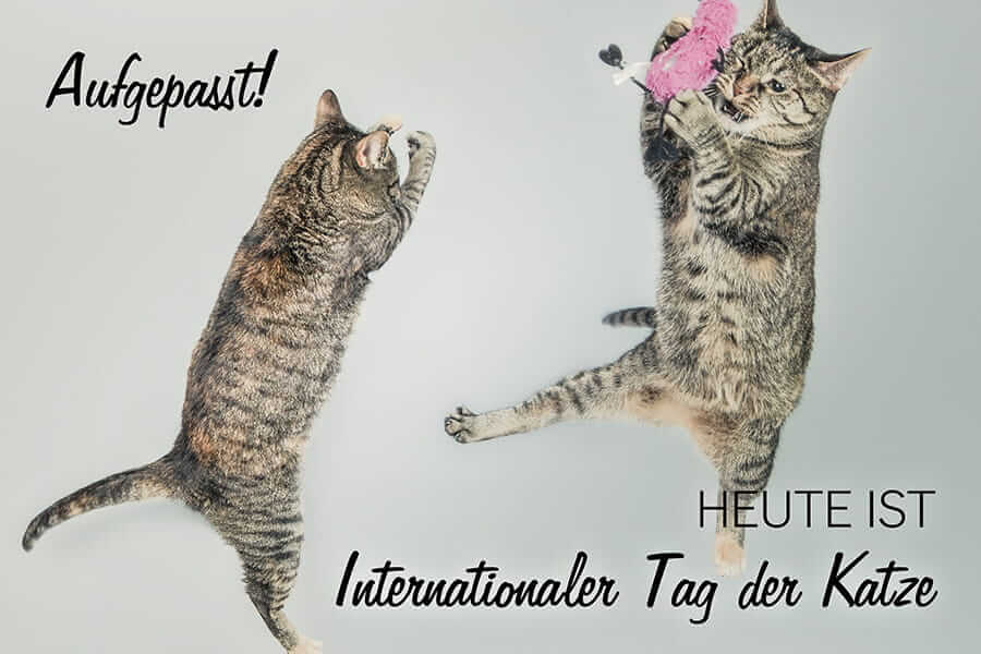 Katzen feiern internationalen Tag der Katze