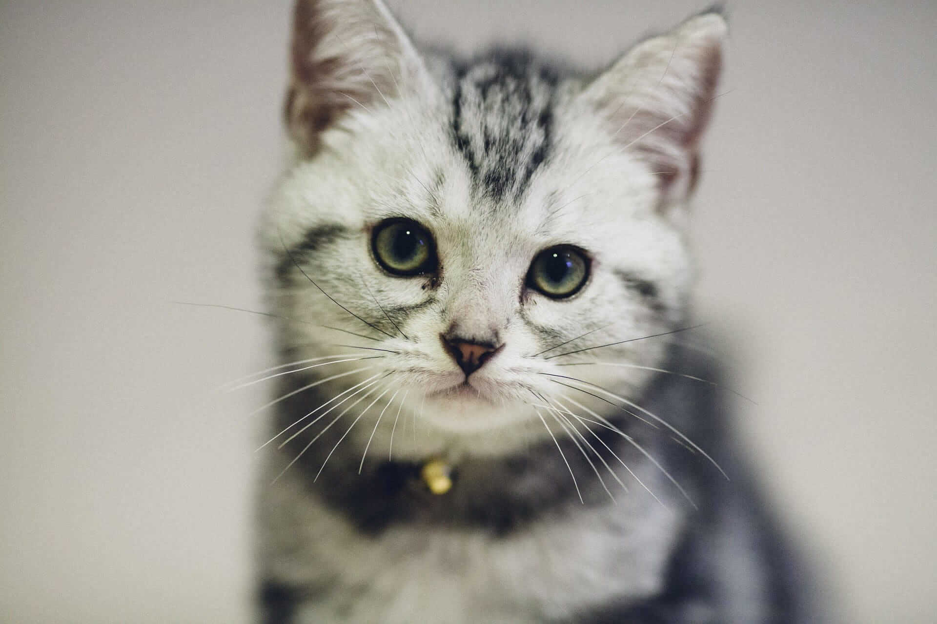 Internationaler Tag der Katze