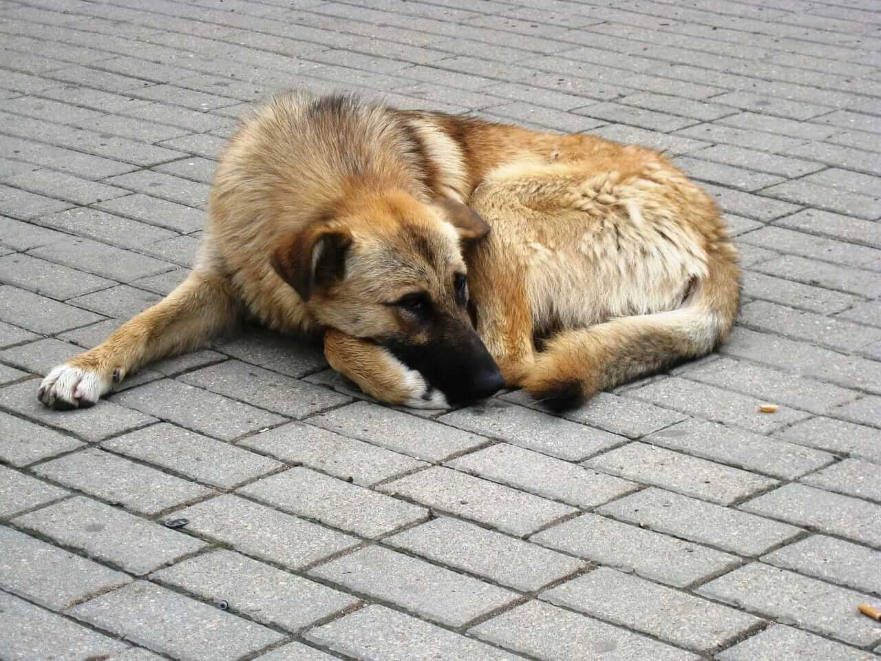 homeless dog