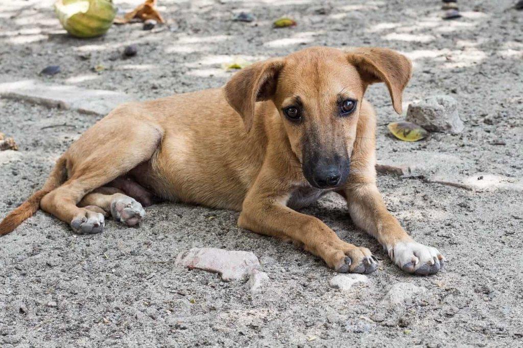 Internationaler Tag der obdachlosen Tiere