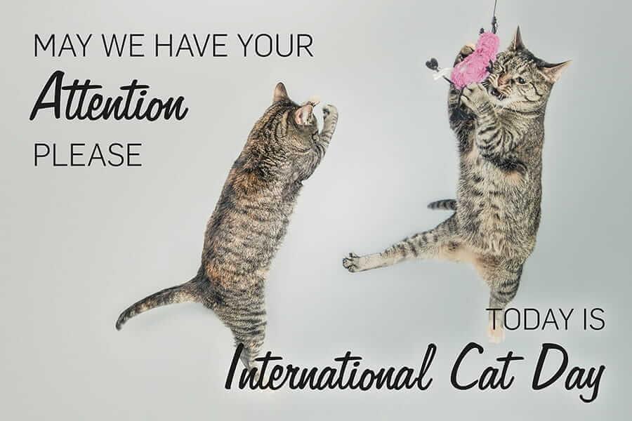 international cat day 2015