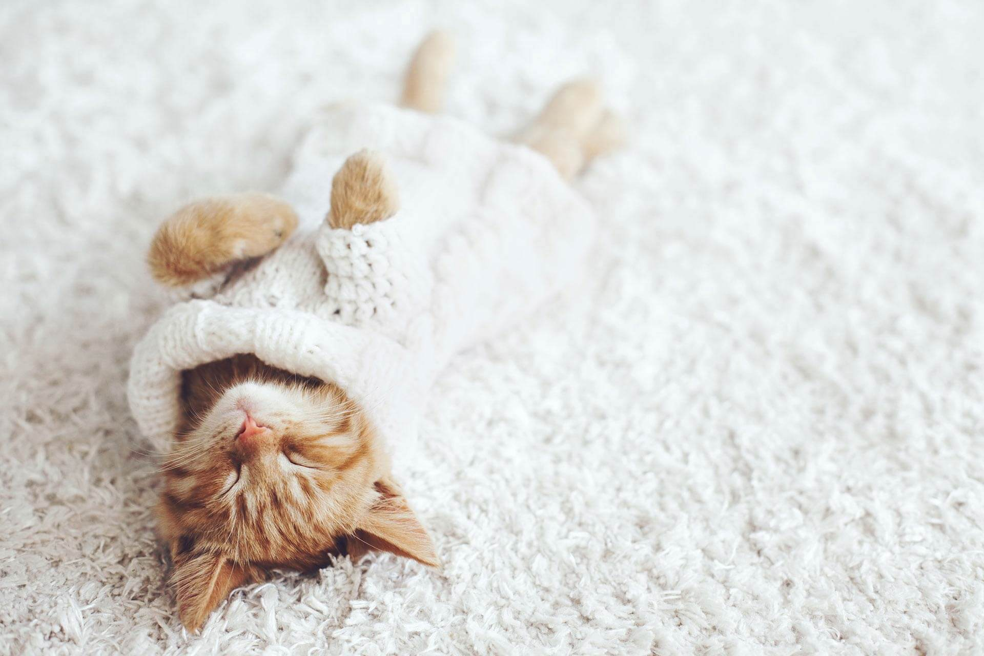 10 Tipps, wie du den Weltkatzentag richtig feierst