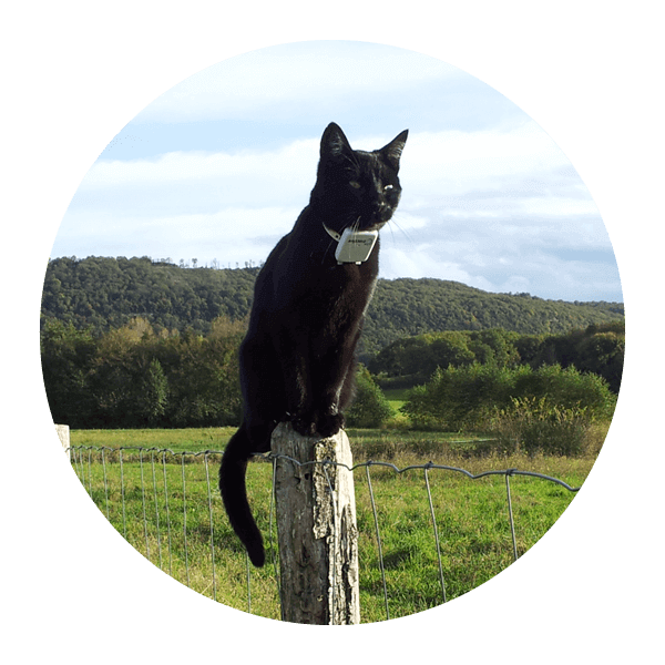 wie lange leben katzen mit diabetes cure