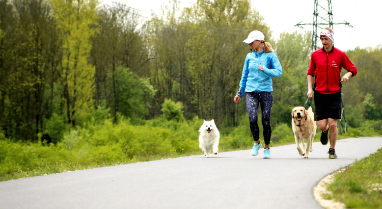 How-to guide about running with dogs