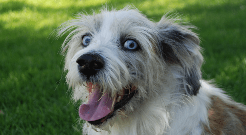 The 10 most popular dog names