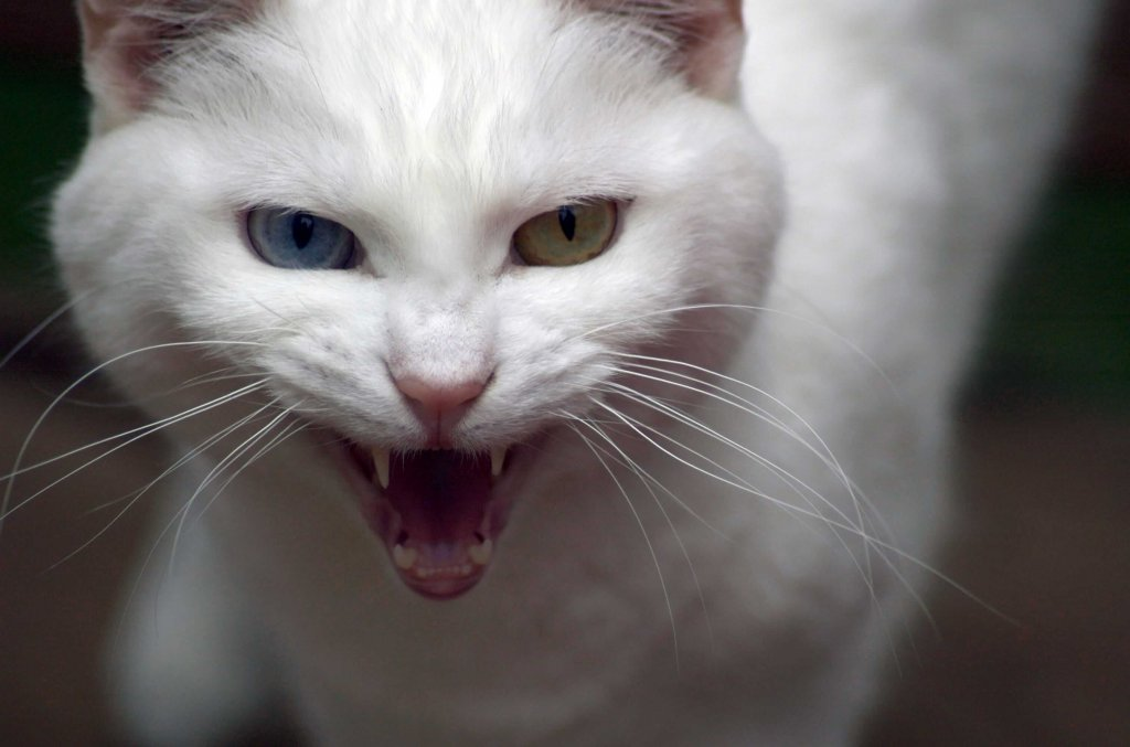 Aggressives Verhalten bei Katzen