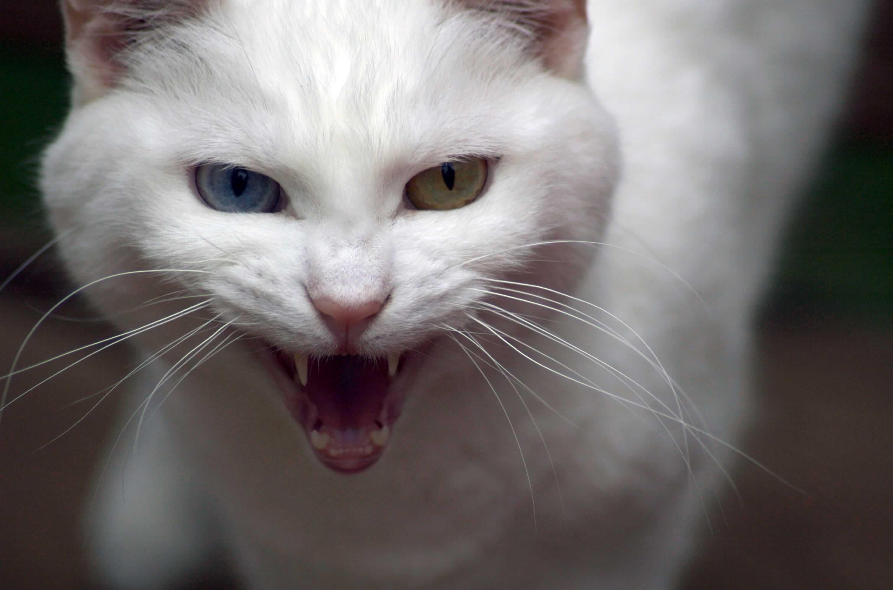 Aggressives Verhalten Bei Katzen Tractive Blog