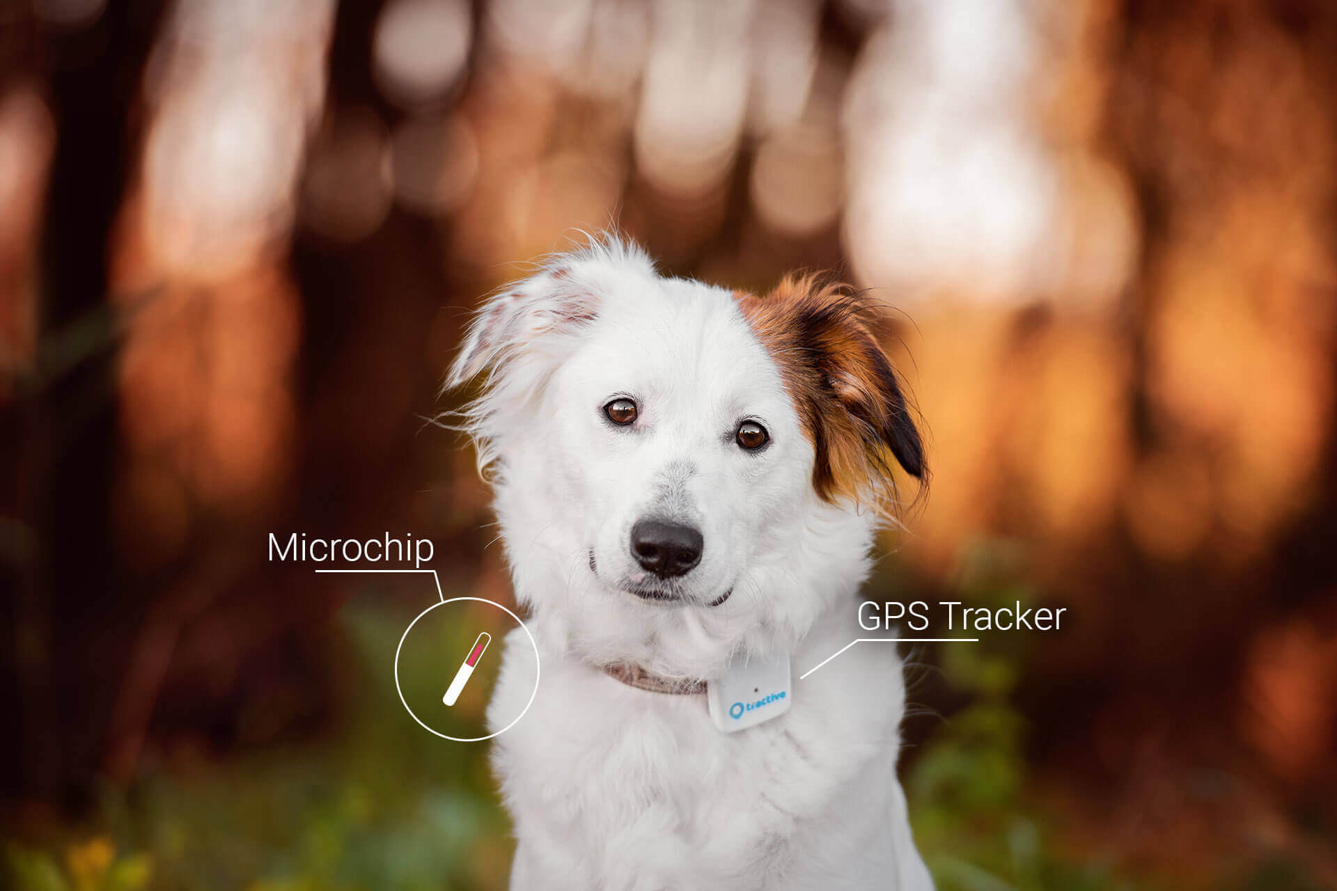 Dog tracking device vs Microchip: See all differences | Tractive