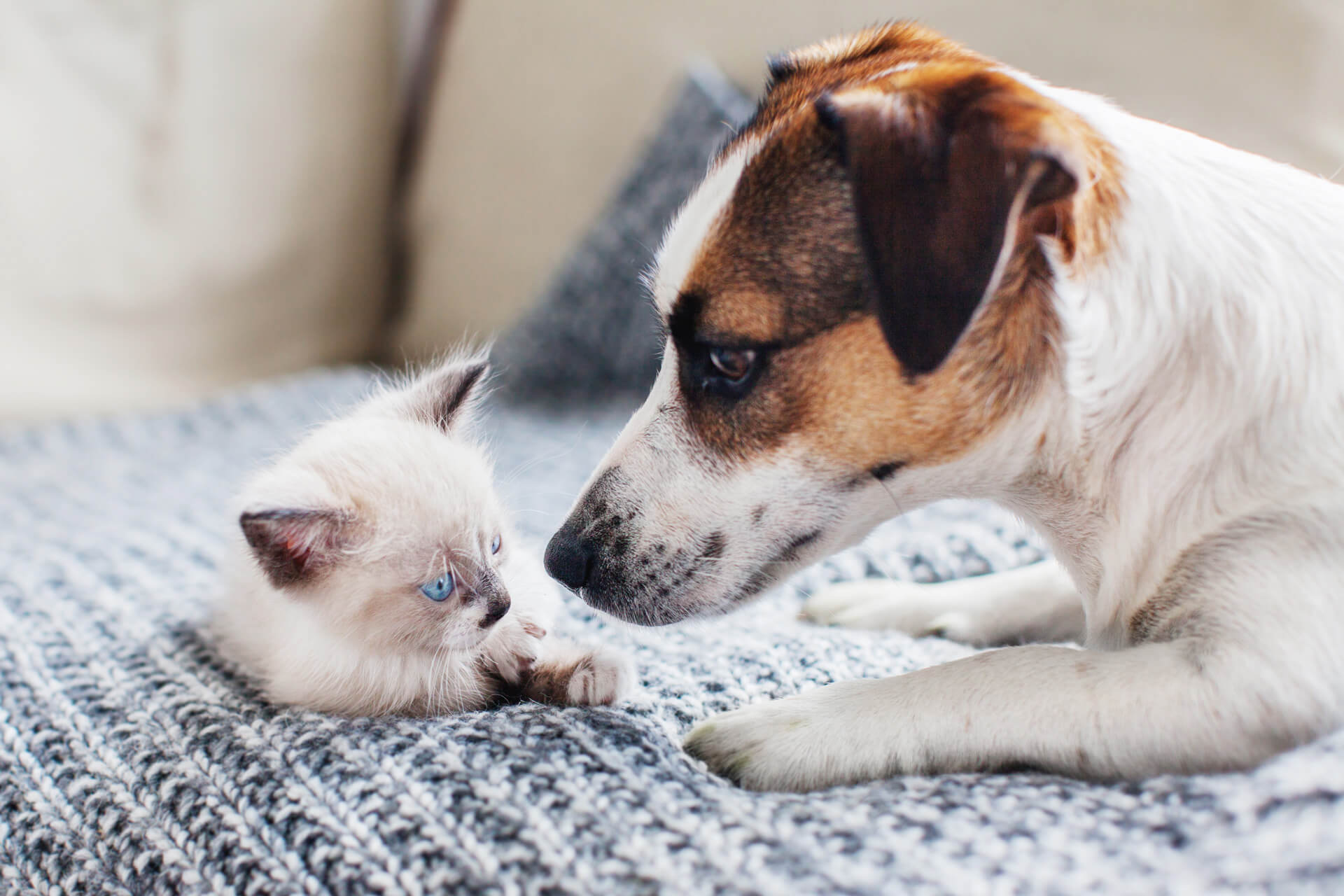 Welttierschutztag ruft dazu auf, vor Tierquaelerei nicht die Augen zu verschließen