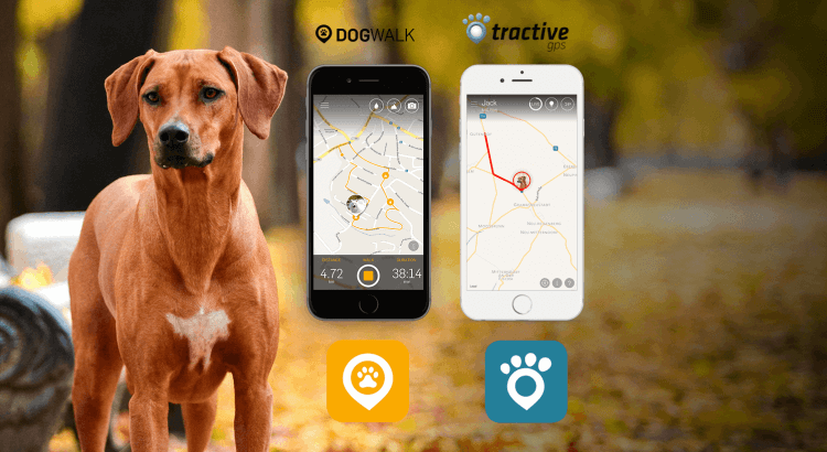 GPS tracking with Tractive Apps