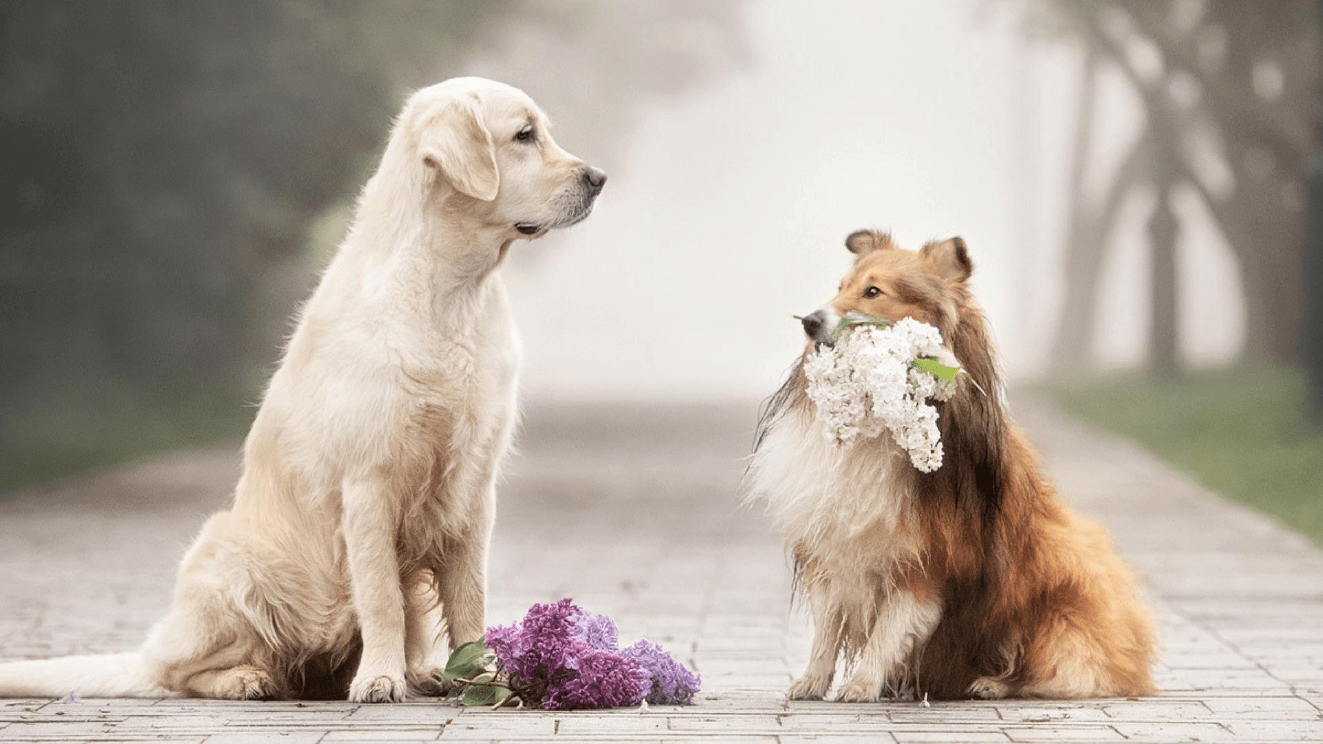 Hunde fotografieren - die richtigen Einstellungen für perfekte Profifotos