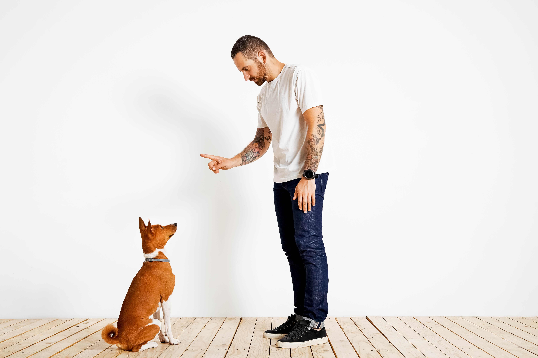 Welpen erziehen - Übersicht zu den wichtigsten Hundekommandos