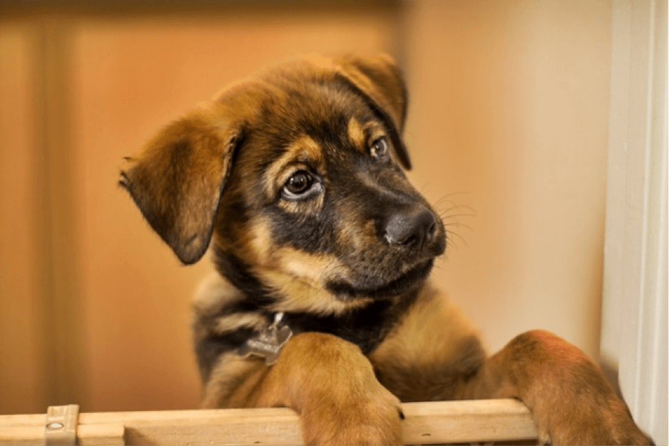 Puppy or adult dog? Find out which dog is right for you!