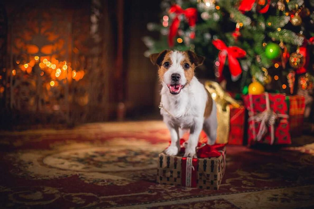 Great Christmas gifts for dogs