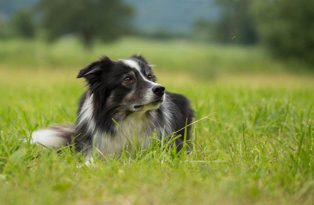 goldene regeln hunde training