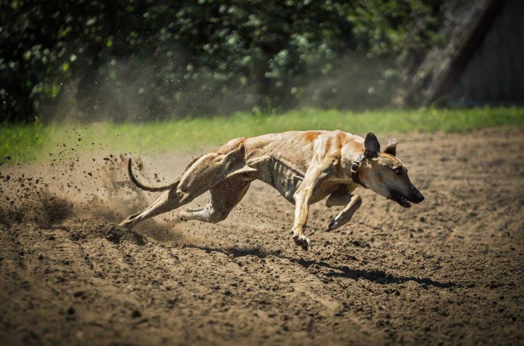 Jagd und Hund – das Jagdverhalten beim Hund