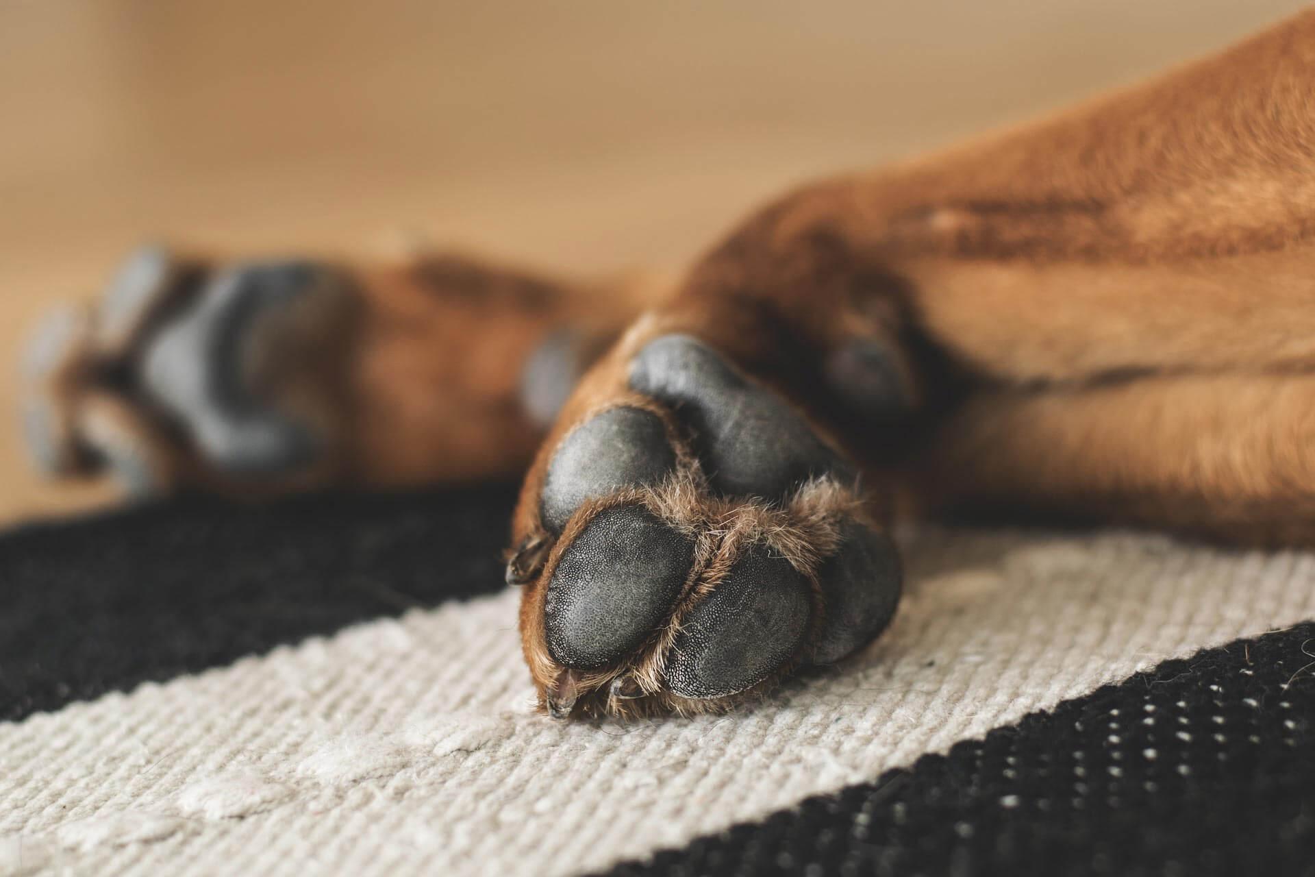 Streusalz & Hundepfoten: Tipps, wie du die Hundepfoten im Winter schützt