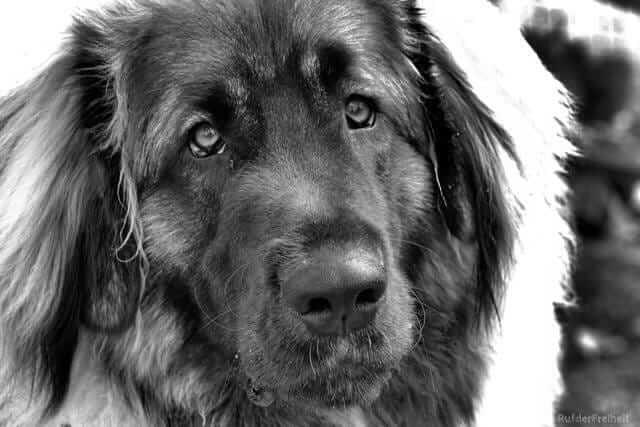 Coping with Dog Cancer