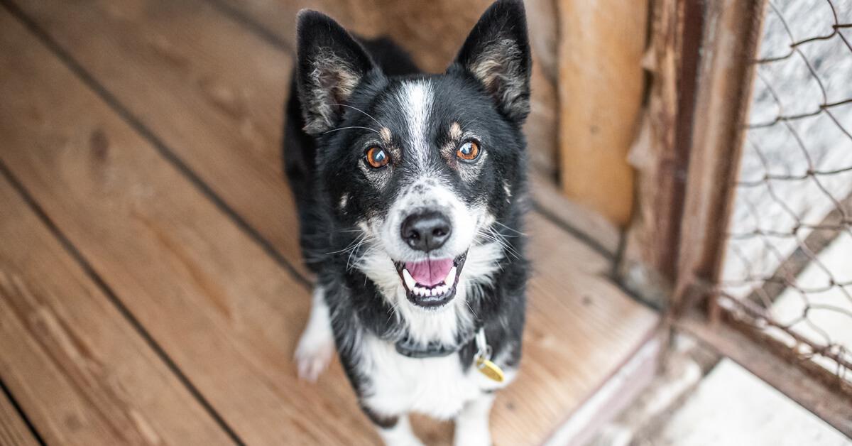 Comment adopter un chien avec succès ?
