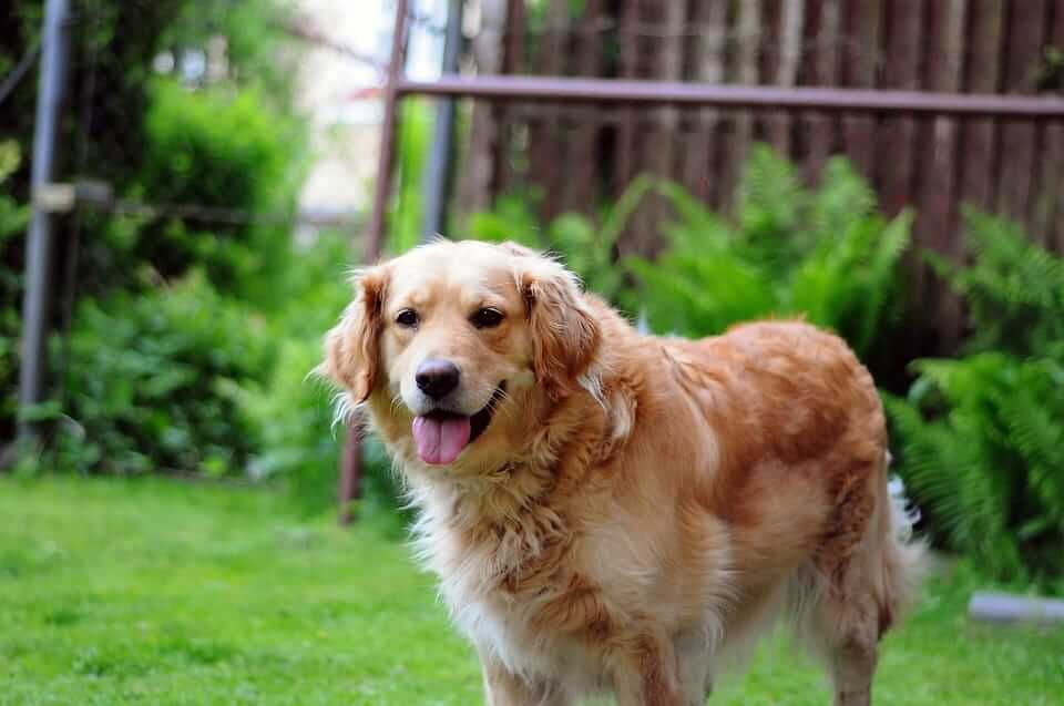 Moving with a dog: All you need to know