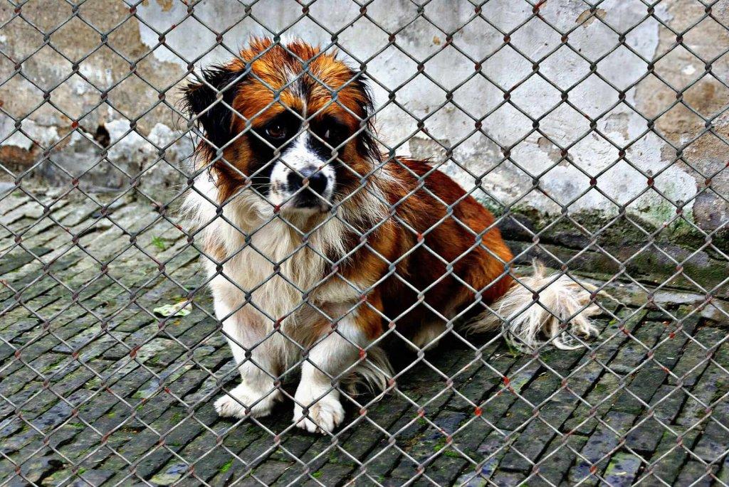 Ein Hund aus dem Tierheim – was erwartet dich?