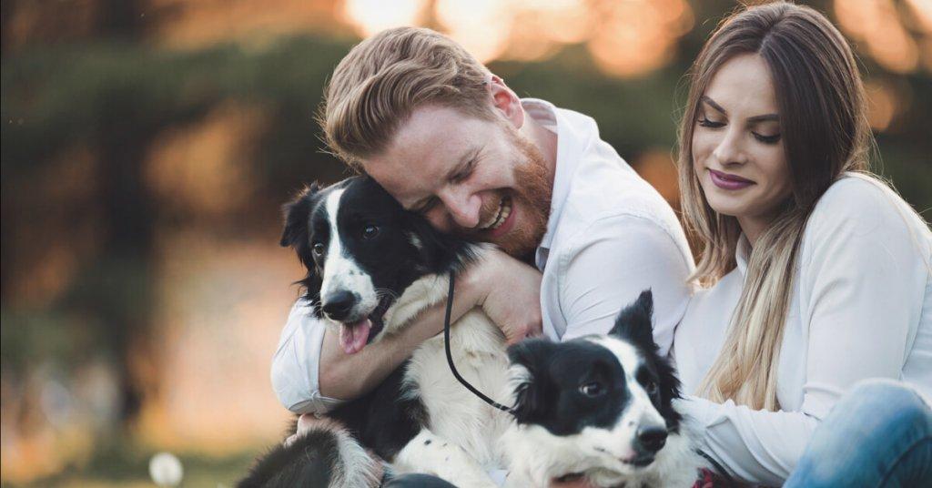Auswahl eines Tierheimhundes - das musst du beachten