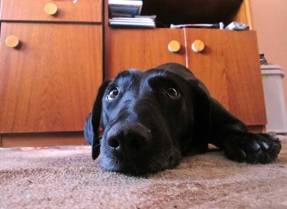 Die Ursache für einen bellenden Hund, wenn er alleine ist