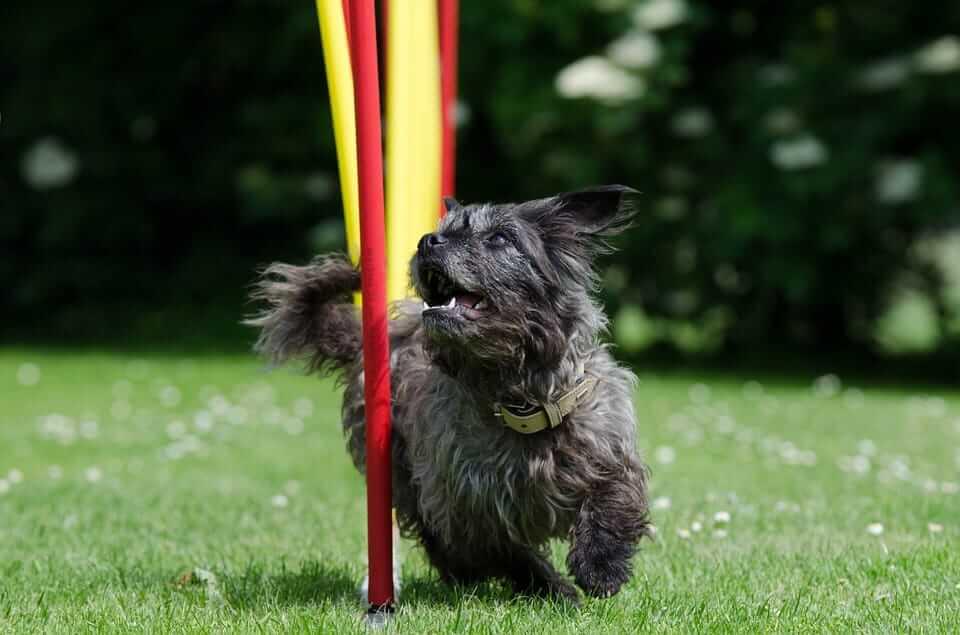sportliche Hunde