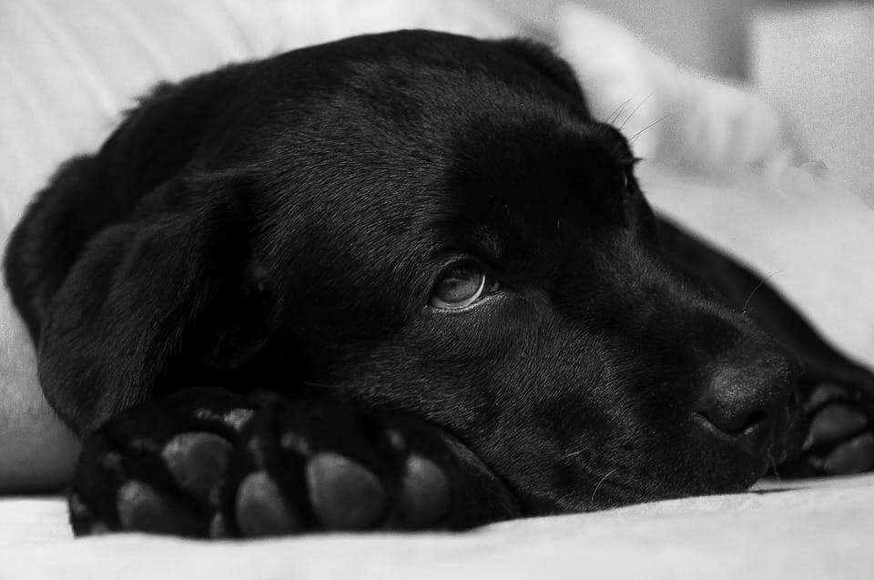Krebs bei Hunden