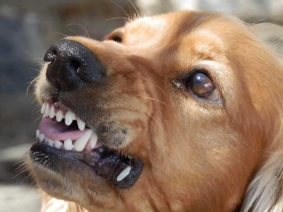 Wachhund als Schutz vor Einbrechern