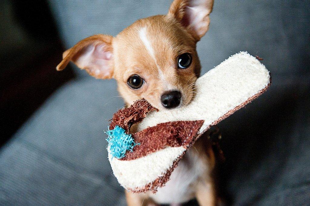 hundebeschaeftigung regentag