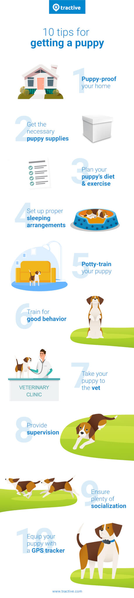10 steps puppy care guide
