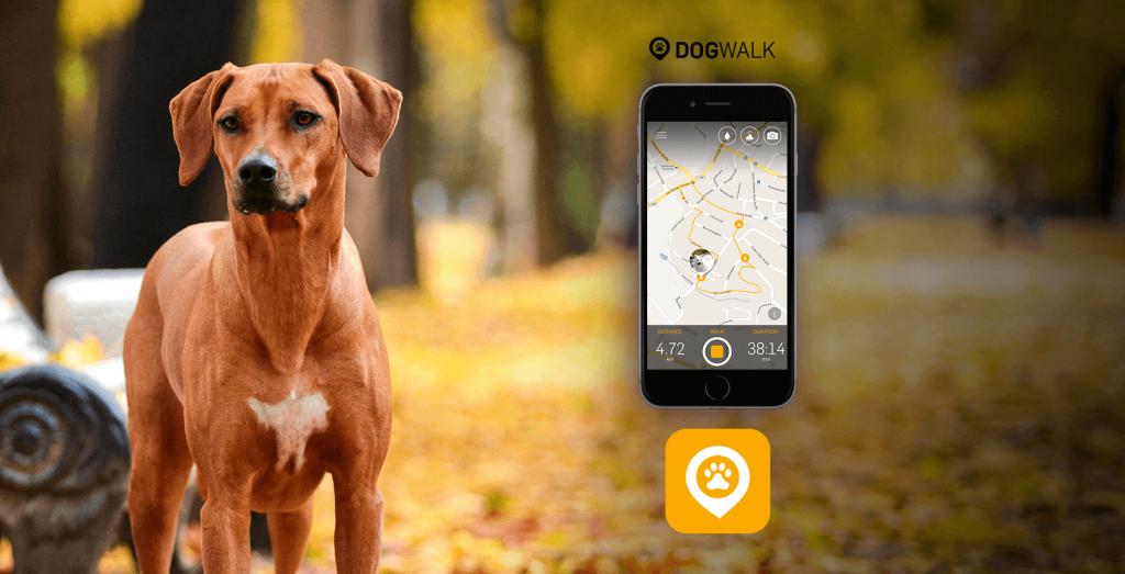 Wie kann ich meinen Dog Walk Spaziergang in sozialen Netzwerken teilen?